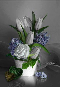 🌻🧡✨🌹💜 Splash of Colour💜 🌹✨💚🌺 Splash Photography, Color Photography, Amazing Photography, Black And White Colour, White Art, White Roses, White Flowers, Color Splash, Beautiful Gardens