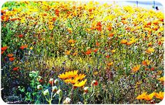 Namaqualand. Nature Scenes, Lens, Africa, The Incredibles, Memories, World, Painting, Outdoor, Art