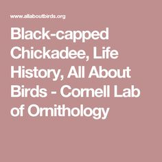 Black-capped Chickadee, Life History, All About Birds - Cornell Lab of Ornithology
