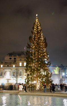 Christmas in London - Christmas tree at Trafalgar Square, carols, santa claus, shopping and more. Norway Forest, Norway Nature, Christmas In England, London Christmas, White Christmas, Denmark Travel, Norway Travel, Austria Travel, Norway Places To Visit