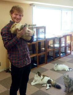 Cats and Ed sheeran yes please I See Fire, Grace Vanderwaal, Cat Sleeping, Edd, Cute Images, Ed Sheeran, Happiness Challenge, Celebrities, Celebs