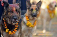 ...behängt wird alles und jeder, und selbst die Polizeihunde in Katmandu kommen...