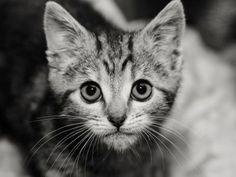 pet gallery - Lost Pet Finders