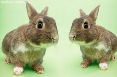 Fractures, falls, bites – it's a scary world out there for rabbits, but you can do a lot to maximize chances that your rabbit stays safe.