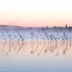 Photo by Terhi Tuovinen. Finnish Lapland. Full moon view at 3am
