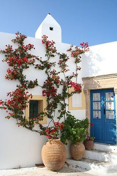 Climbing bougainvillea vines and cerulean blue painted double front doors.