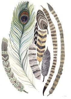 pheasant and peacock feathers