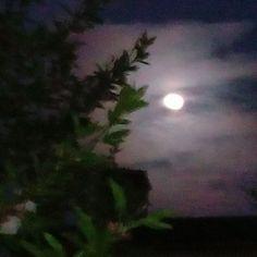 Buenas noches crivillenenses. Hoy con esta fotografía espectacular de la luna llena entre almendros