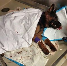 Please pray for K9 Jethro and his family