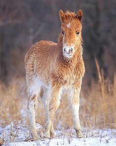 """Assateague Island off the Maryland/Virginia coastline where the wild Chincoteague Ponies live. """"Fuzzy"""" by Nature Is Art Photography."""