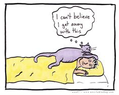 what cats know