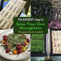Review This Reviews!: Hamama Microgreens Growing Kit Review & Success Tips Chocolate Yogurt, Yogurt And Granola, Diet Reviews, Healthy Eating Habits, Keto Cookies, Whole Foods Market, Low Carb Keto