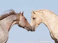 The Brothers  Fine Art Wild Horse Photograph by Carol Walker www.LivingImagesCjW.com
