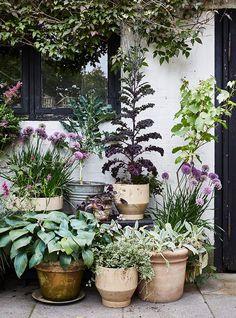 Accumulate the plants with colorful foliage allows to dress a facade Small Courtyard Gardens, Back Gardens, Small Gardens, Lake Garden, Dream Garden, Garden Cottage, Garden Spaces, Garden Pots, Potted Garden
