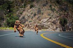 #longboarding bears ;-bajandolacolina.tumblr.com/post/27397413687