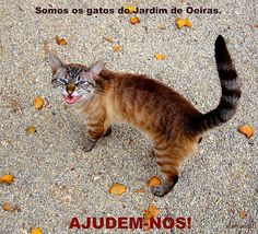 Help these cats, please ! - URGENTE - Ajudem estes gatos, por favor! (note: this cat has been adopted!)