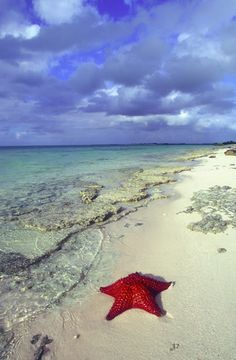Starfish Beach, Grand Cayman - Cayman Islands ~ @My Travel Manual