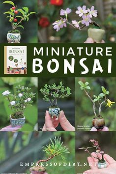 In the new book, Miniature Bonsai: The Complete Guide to Super-Mini Bonsai, author Terutoshi Iwai shows us how to raise plants from seed or cuttings to create charming, thimble-sized potted bonsai. Succulent Bonsai, Bonsai Garden, Planting Succulents, Succulent Wall, Succulents Garden, Indoor Gardening Supplies, Container Gardening, Bonsai Tree Care, Mini Plants