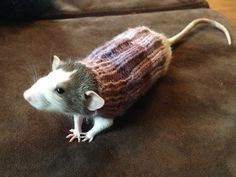 Ravelry: Rat sweater pattern by Anne Knight This is the strangest thing I've ever seen knit