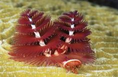 Feather worm: Have tubular digestive systems with openings at both ends. Some organs and more specialized tissues.
