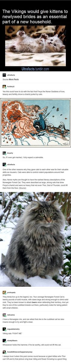 Thor, the cat # funny animals - Scherzkeks - Humor Crazy Cat Lady, Crazy Cats, Funny Cute, Hilarious, Super Funny, Gato Animal, Funny Animals, Cute Animals, Happy Animals