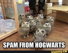 """Foto: """"Spam from Hogwarts"""""""