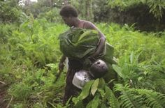 A woman carrying a kettle, pot, and crops wrapped in banana leaves. Roviana Solomon Islands - Google Search Solomon Islands, Fair Trade, Garden Sculpture, Banana Leaves, Organizations, Kettle, December, Range, Organic
