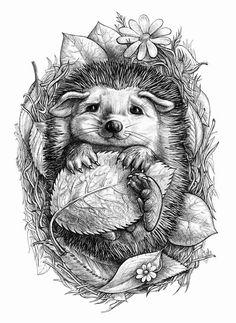 """little hedgehog""   elina cherianidou"