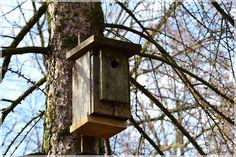 Moje życie na wsi: Budki lęgowe dla ptaków- post ornitologiczny