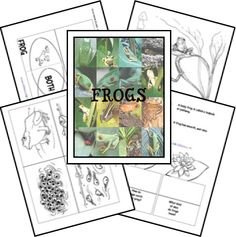 Frog Unit Study and Lapbook Printables. Great for the Frog and Toad story books. Montessori, Free Homeschool Curriculum, Homeschooling, Lifecycle Of A Frog, Frog Theme, Frog Life, My Father's World, Frog And Toad, Frog Frog