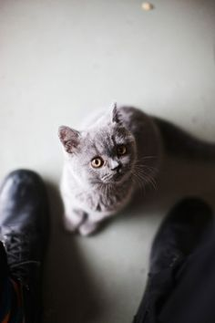 Inside Mellisa Loughnan and Simon Griffiths' Fitzroy warehouse.  Adorable cat