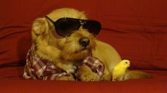 """the vet refuses to call winston's parakeet by his real name, """"ol' birdy bastard""""  -hipster puppies from tumblr"""