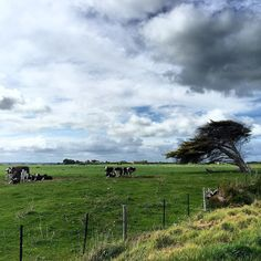 This Windswept Country. by miss_karolina_k