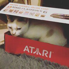 By ivanodintsoff: Zibanquinha Atari #atari #retrogaming #cat #atari2600 #atari2600 #micrhobbit