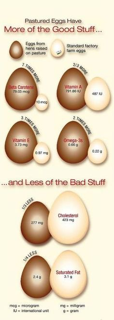 Pastured Eggs Have More of the Good Stuff....  Less of the bad!    (If you would like to see the entire article that was printed with this infographic in Mother Earth News click the photo and you will be directed to the album that contains all the pages that were published.)