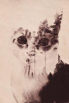 CAT Double Exposure by Arctech