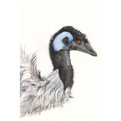 Emu Painting  E050 Print of watercolor painting 5 by Splodgepodge, $15.00