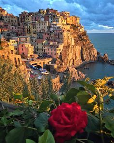 Kiss from a Rose by SEAL ....anyone remember that song?  #Manarola #CinqueTerre #Italy . . I will call the day early today...tomorrow I will go to #Tegalalang rice terrace in #Ubud #Bali  for sunrise shooting... Wish you a good night and sweet dreams . . by sassychris1
