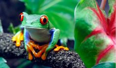 Visit a Rain Forest Destination and Make a Difference