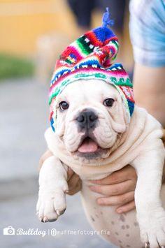 :) Bulldog. Perro. Dog. www.facebook.com/ruffmefotografia