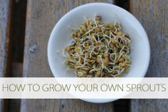 Best way to get fresh green salad in the winter! How to Grow Your Own Sprouts (No Soil Required) at lifeyourway.net