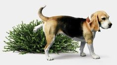 Frequent Urination In Dogs: What's Behind It?