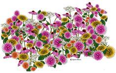 Freebie Flowers     PhotoImpact Tutorials