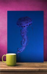 Animals | Art prints on metal by Richard Casillas #jellyfish #blue #deepblue #ocean #sea #nature #metalprint #art #homedecor #wallart #displate