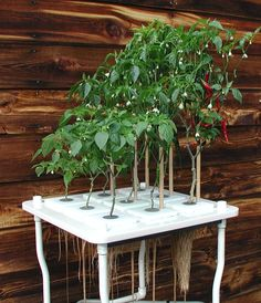 hydroponics systems - Google Search
