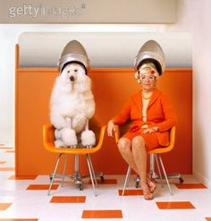 Eames Plastic Chair for Poodle 'dos