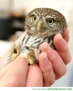 this owl is sooo cute