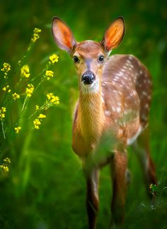 Fawn And Flowers by Steve Perry, via 500px