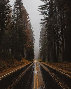 Let's see where the road takes us! 🌲 . ⚡️... - Wallets and Whiskey