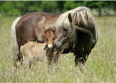 Mama and colt